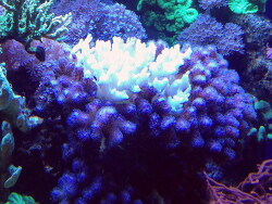 Korallenbleiche thumbnail
