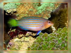 25g bionische Straße Asien T8F6 Seefischen kleiner fetter Steinköder 18CMm